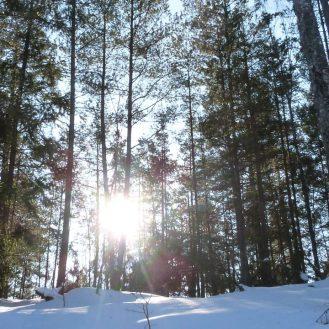 Vistas del bosque de Björnkulla desde mi cuart Estocolmo