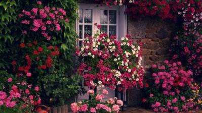 casas-flores-L-Uy262d